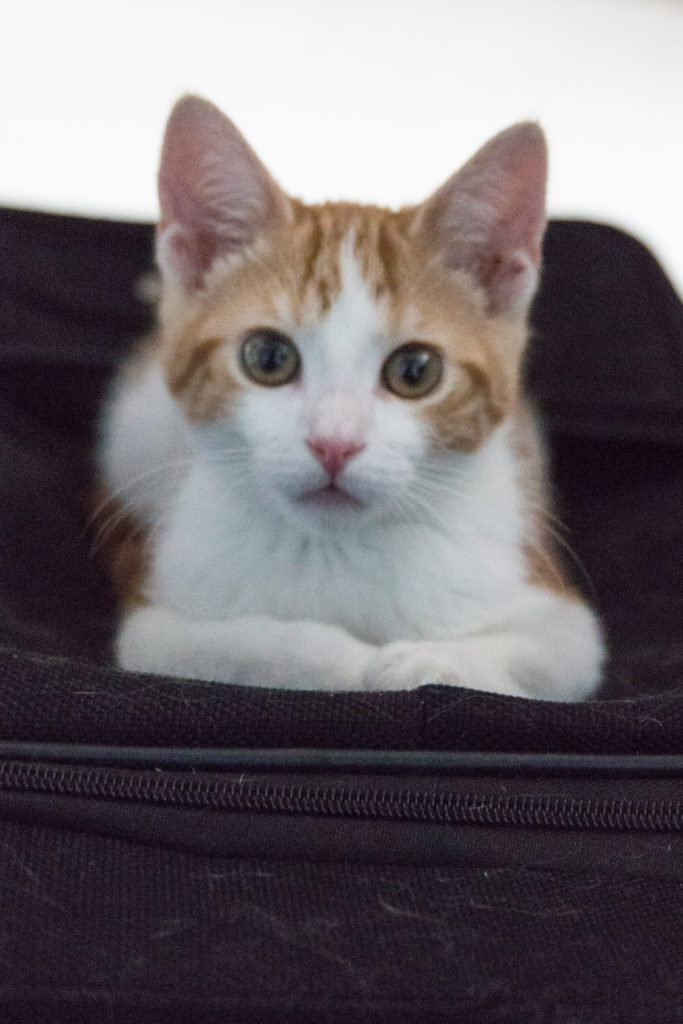 baby Hobbes on the suitcase