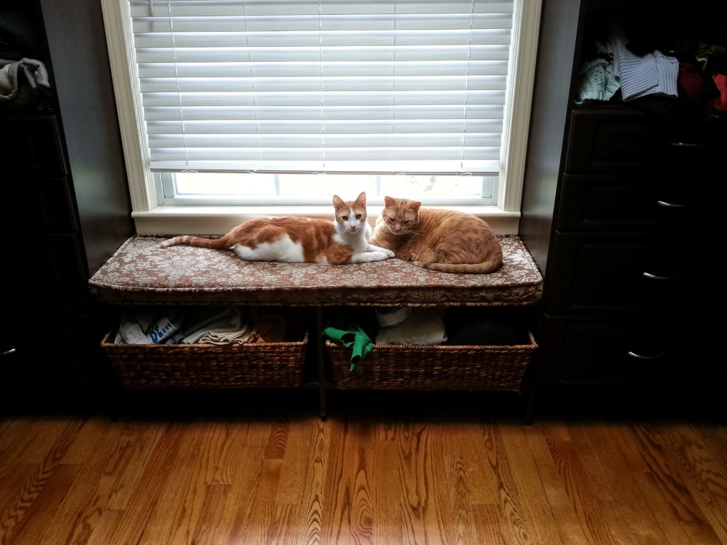 Hobbes and Apollo on the dressing room window seat