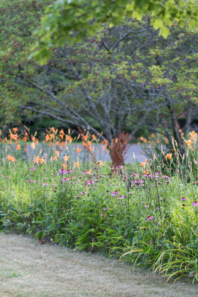 Lilies in the Neighborhood