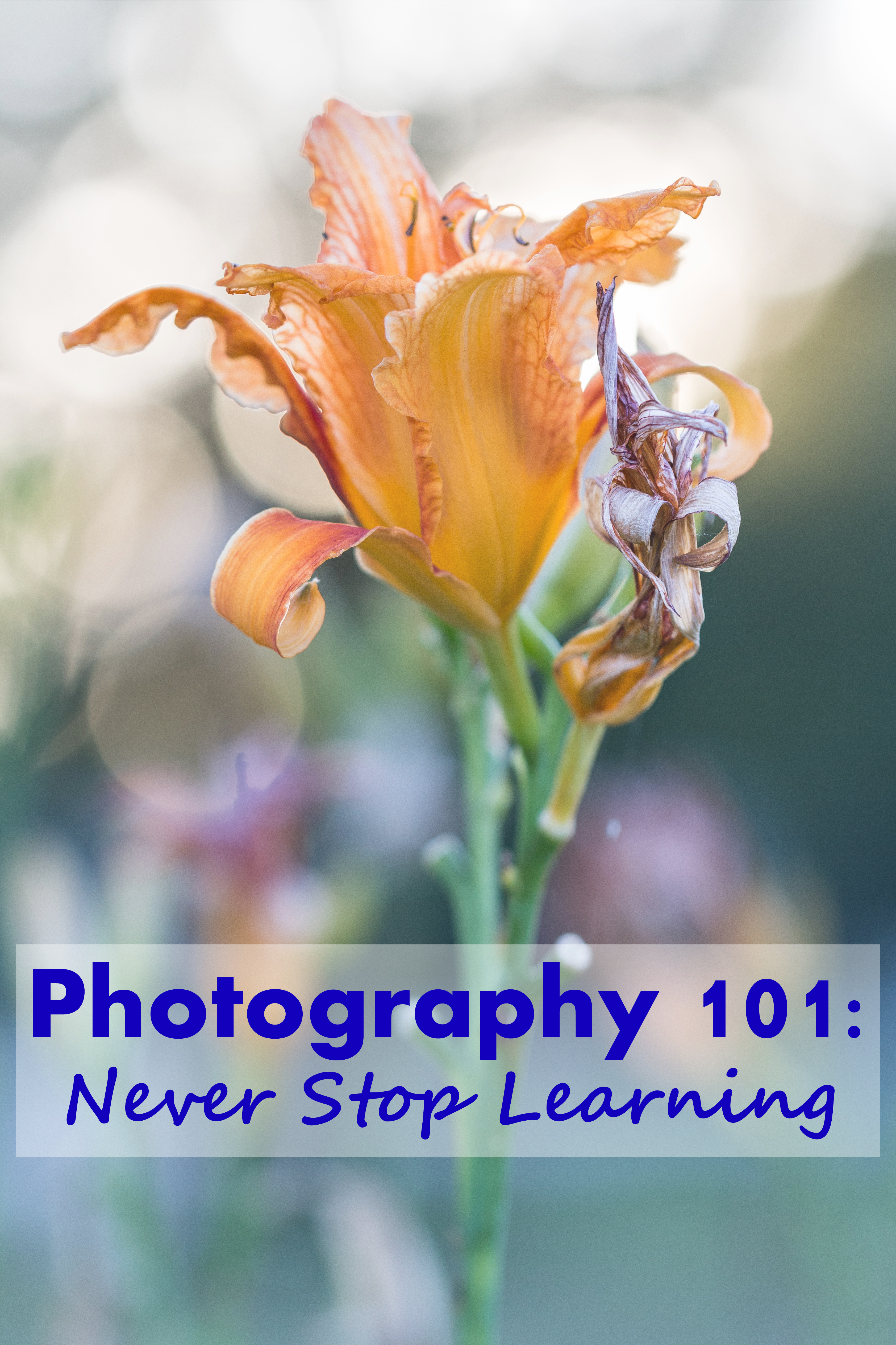 Photography 101: Never Stop Learning - Making an effort to learn new technical, composition, and editing techniques on a regular basis is key to staying current in the field and continuing to improve your skills as a photographer. | https://www.roseclearfield.com