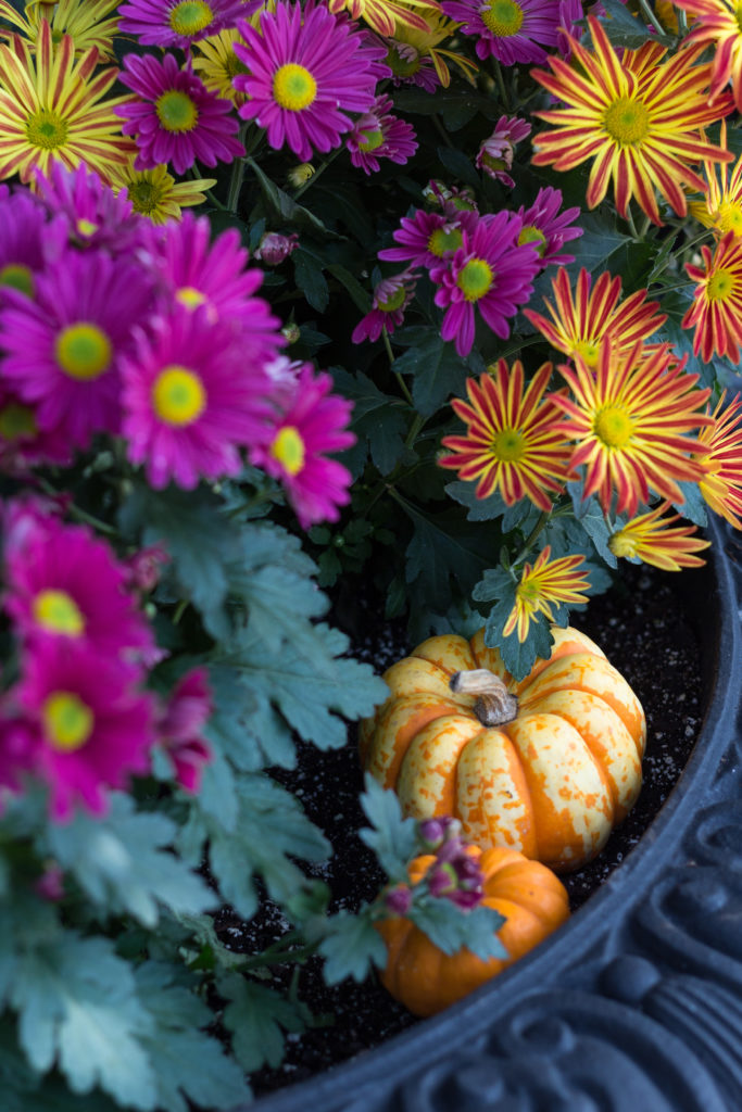 Fall Harvest Festival Floral Show at the Mitchell Park Domes | https://www.roseclearfield.com