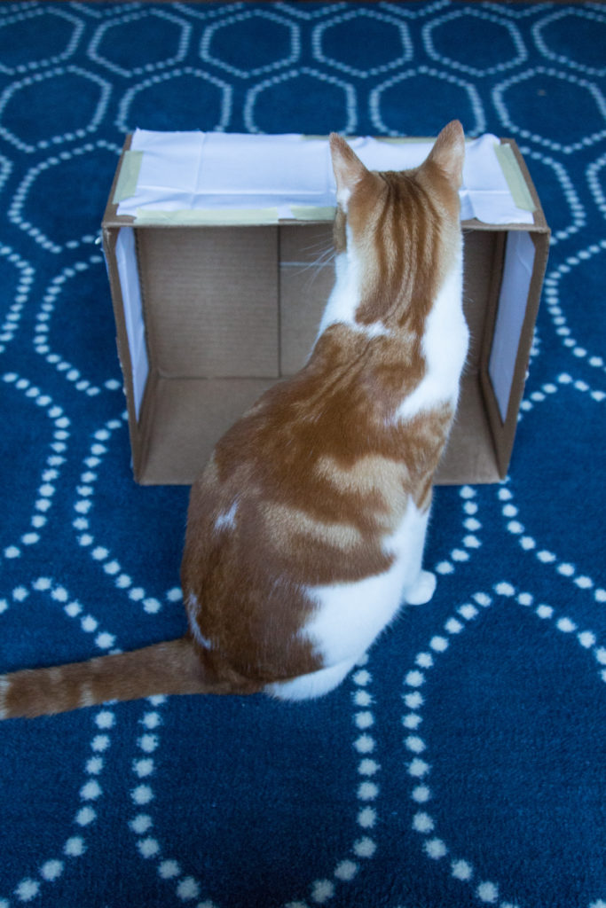 Orange Cat Lightbox Helper | https://www.roseclearfield.com