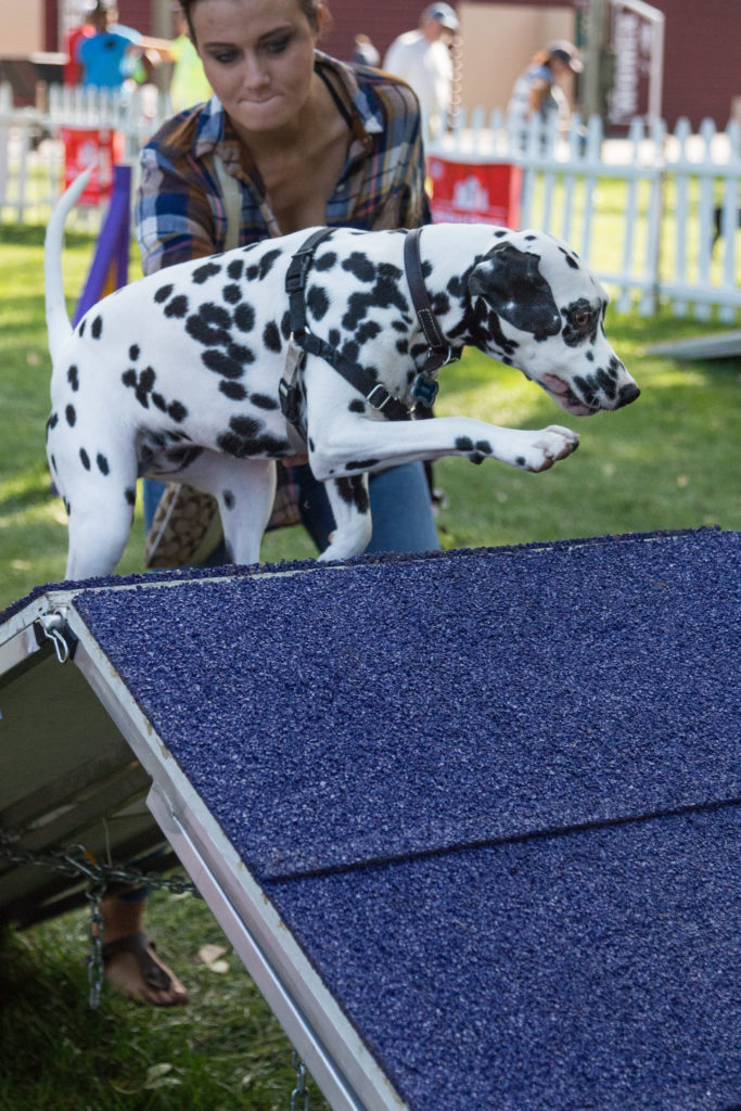 Dog Agility Training at Fromm PetFest | https://www.roseclearfield.com