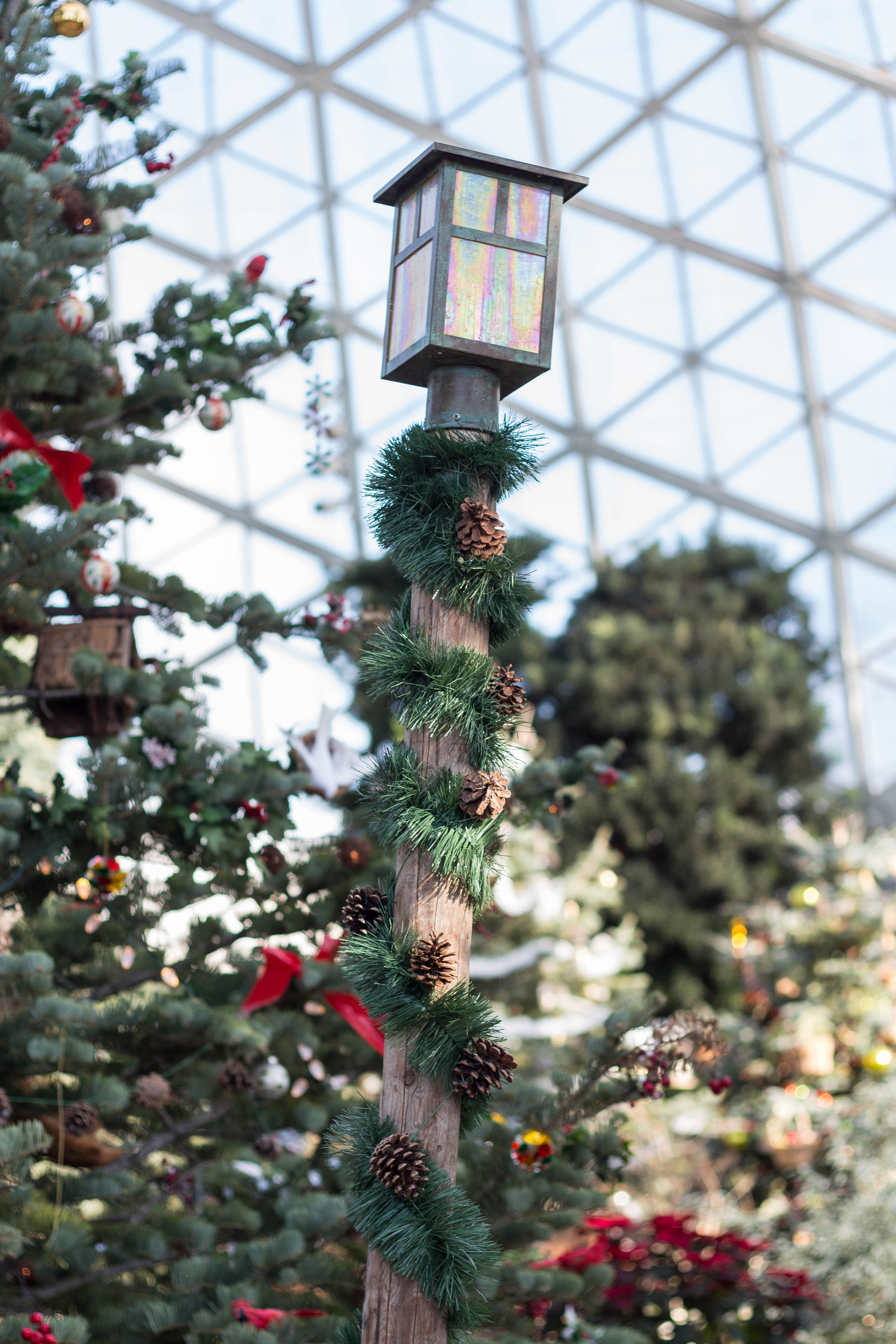Not a Creature Was Stirring Holiday Floral Show at the Mitchell Park Domes | https://www.roseclearfield.com
