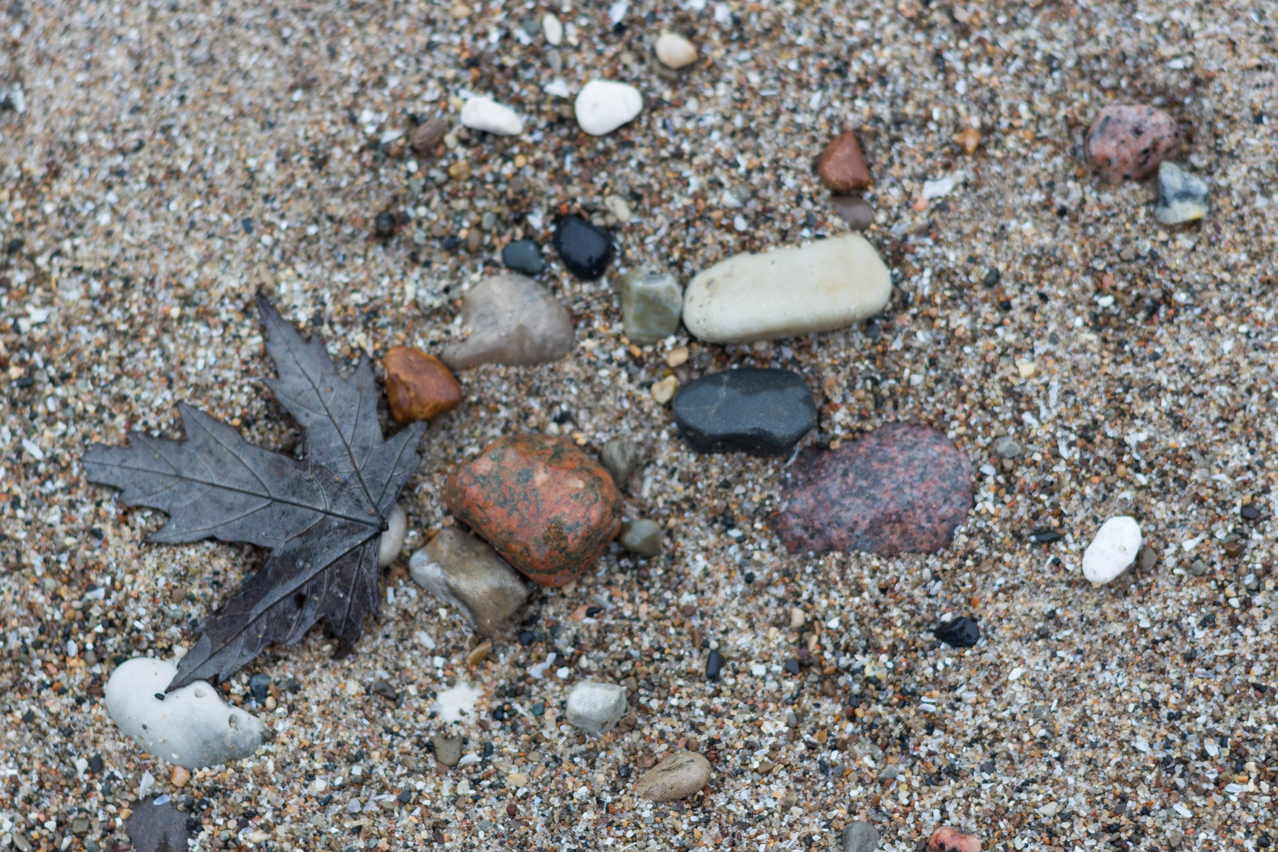 Rocks and a Leaf on the Beach | https://www.roseclearfield.com