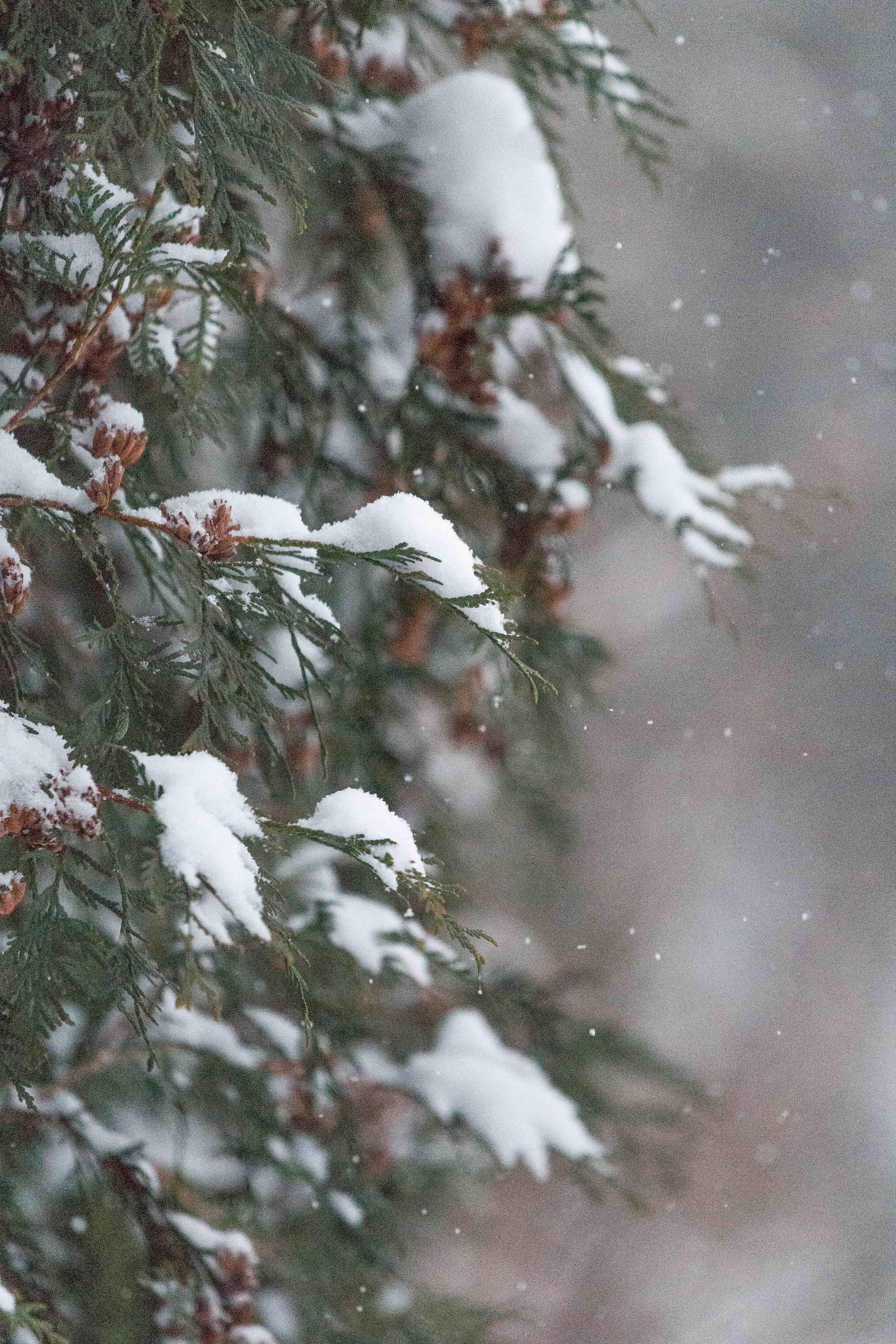 Snow in the Backyard | https://www.roseclearfield.com