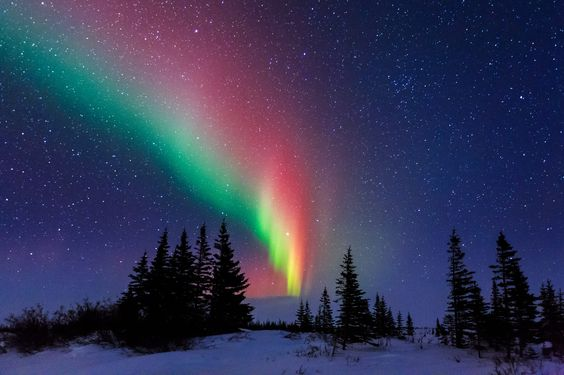 Aurora Over the Trees of Churchill Manitoba by David Marx | https://www.roseclearfield.com