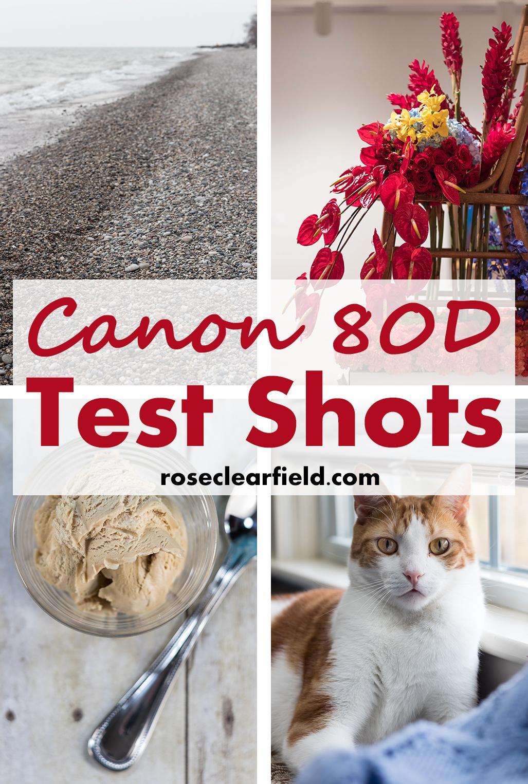 Canon 80D Test Shots | https://www.roseclearfield.com