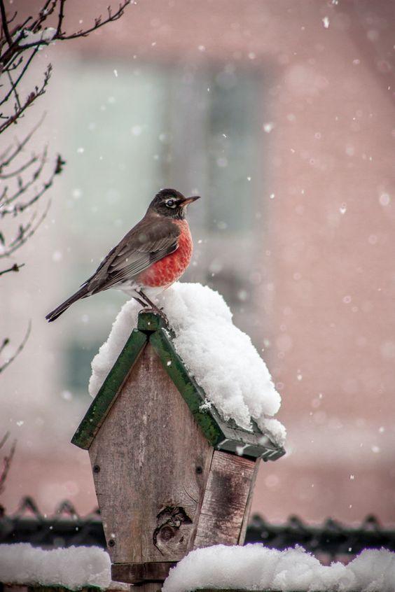 Early Spring Inspiration - B for Bird, M. Atif Murtaza, 500px | https://www.roseclearfield.com