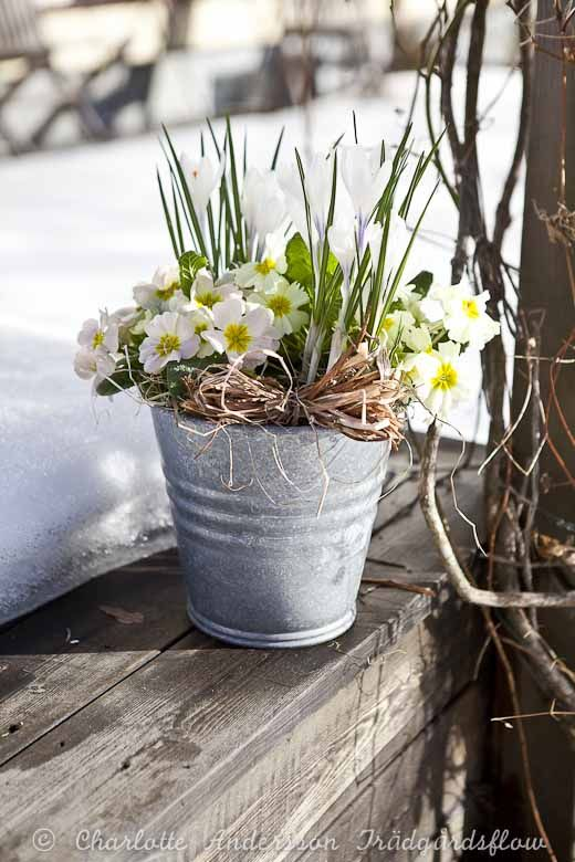 Early Spring Inspiration - Photo by Charlotte Anderson Tradgardsflow | https://www.roseclearfield.com