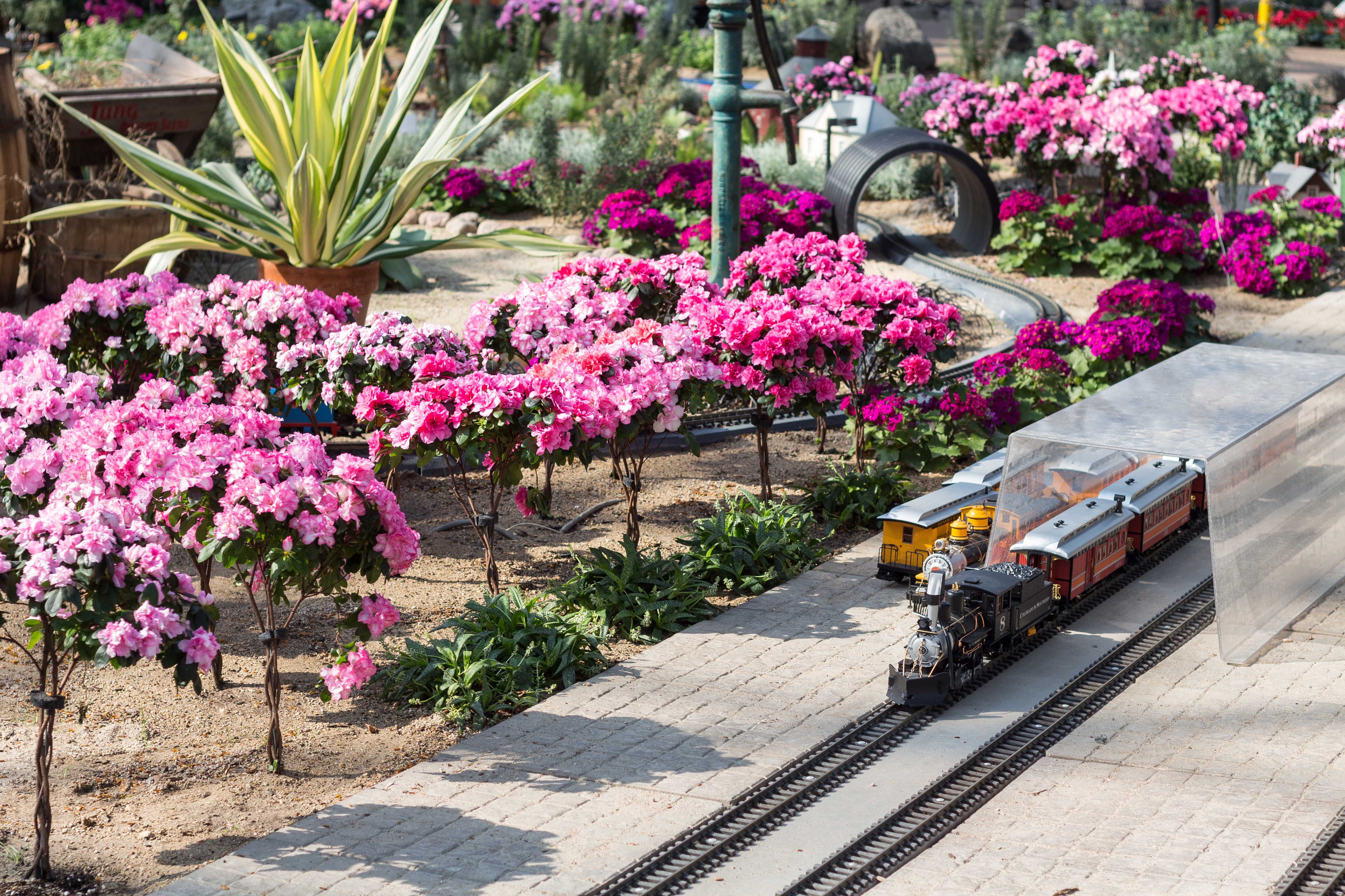 The Great Train Robbery Train Show at the Domes | https://www.roseclearfield.com