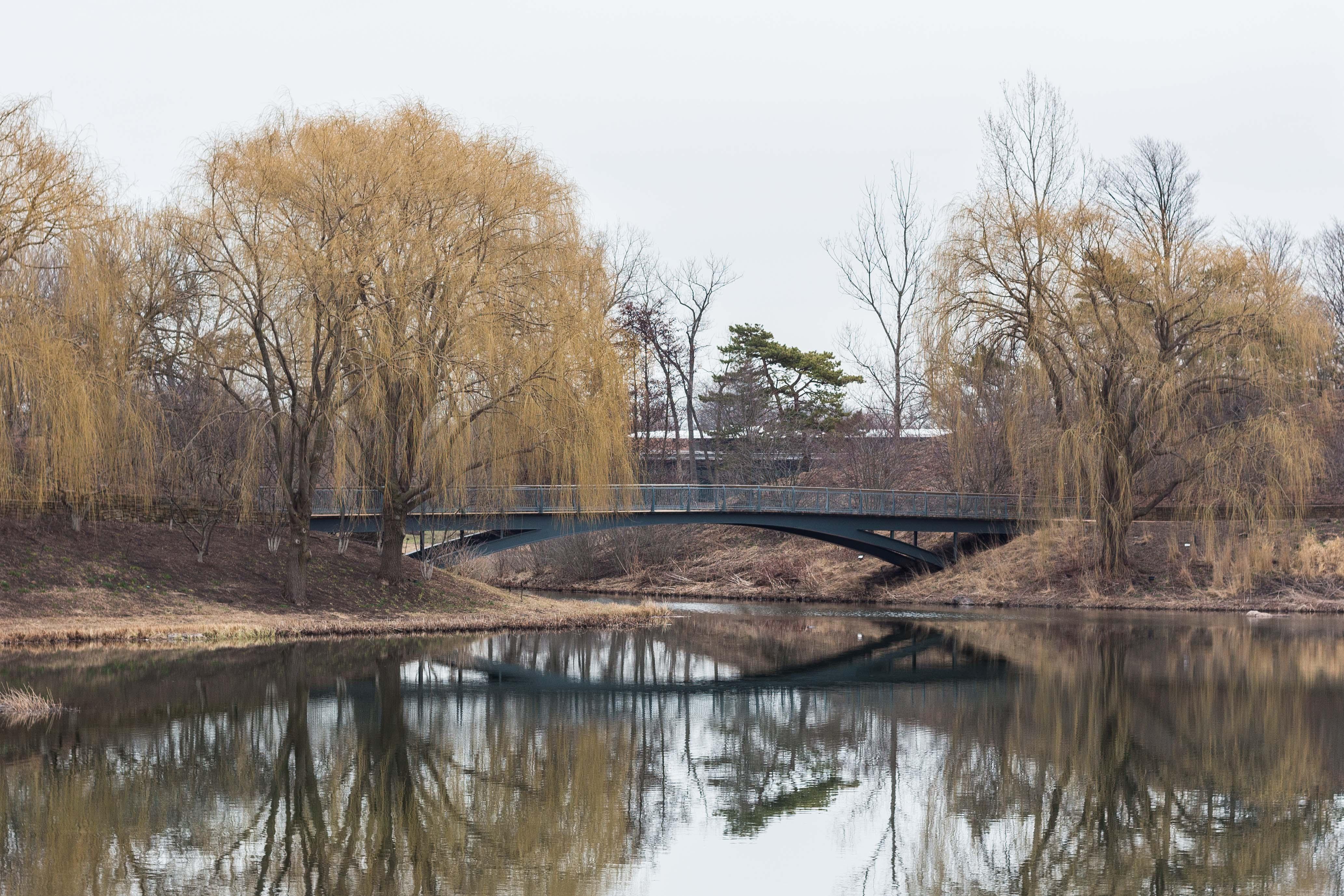 Chicago Botanic Gardens Lake Reflection | https://www.roseclearfield.com