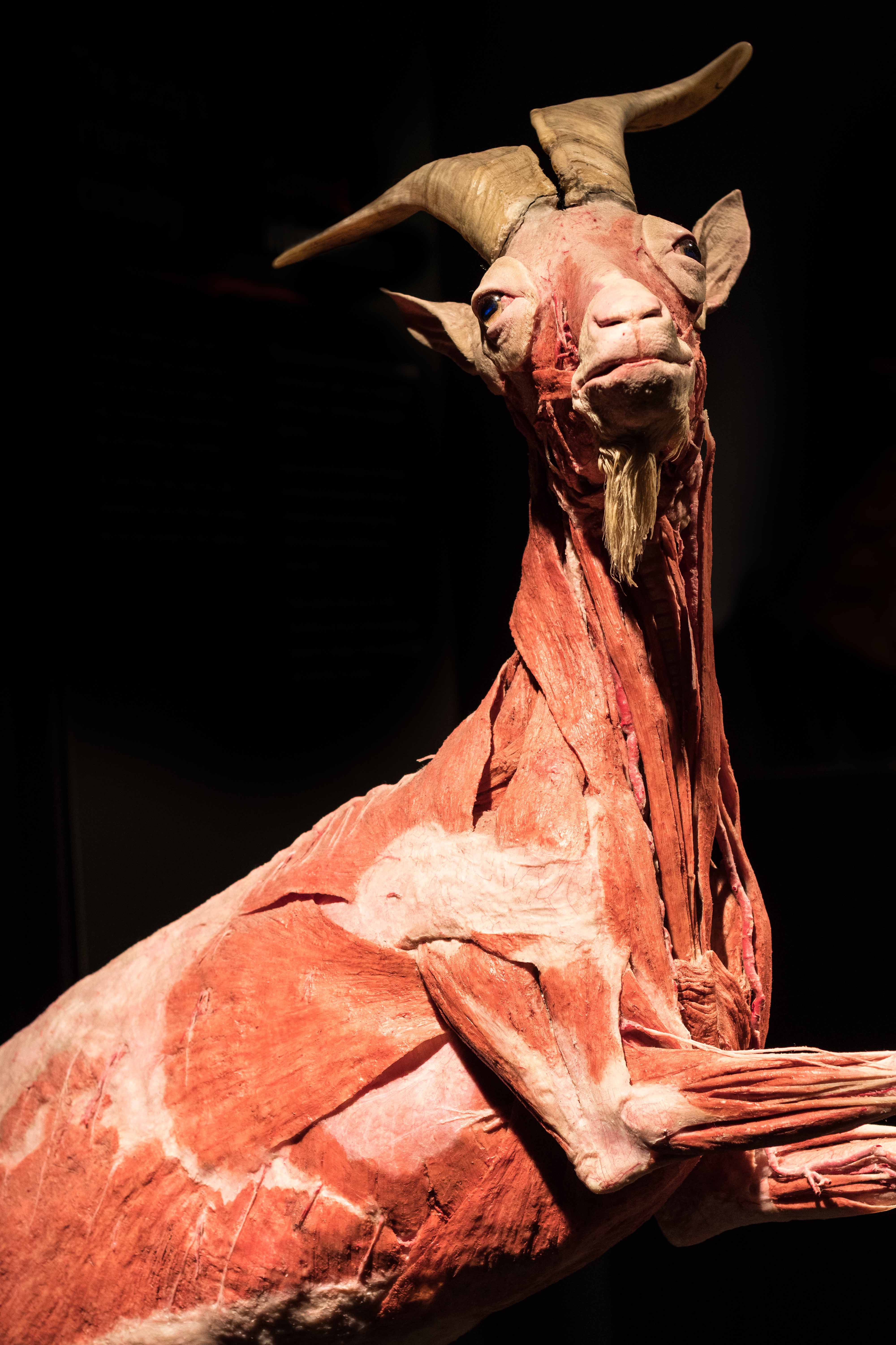 Body Worlds Animal Inside Out, Milwaukee County Zoo | https://www.roseclearfield.com