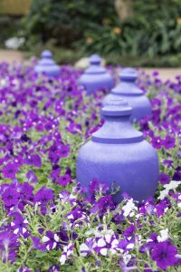 Mitchell Park Domes Ultra Violet Summer Floral Show   https://www.roseclearfield.com
