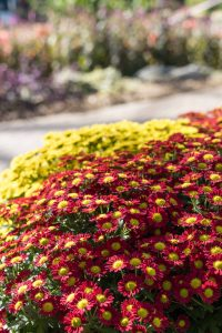 Mitchell Park Domes Flower Power Fall Floral Show | https://www.roseclearfield.com