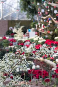 Mitchell Park Domes Naughty or Nice Holiday Floral Show | https://www.roseclearfield.com