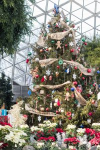 Mitchell Park Domes Naughty or Nice Holiday Floral Show   https://www.roseclearfield.com