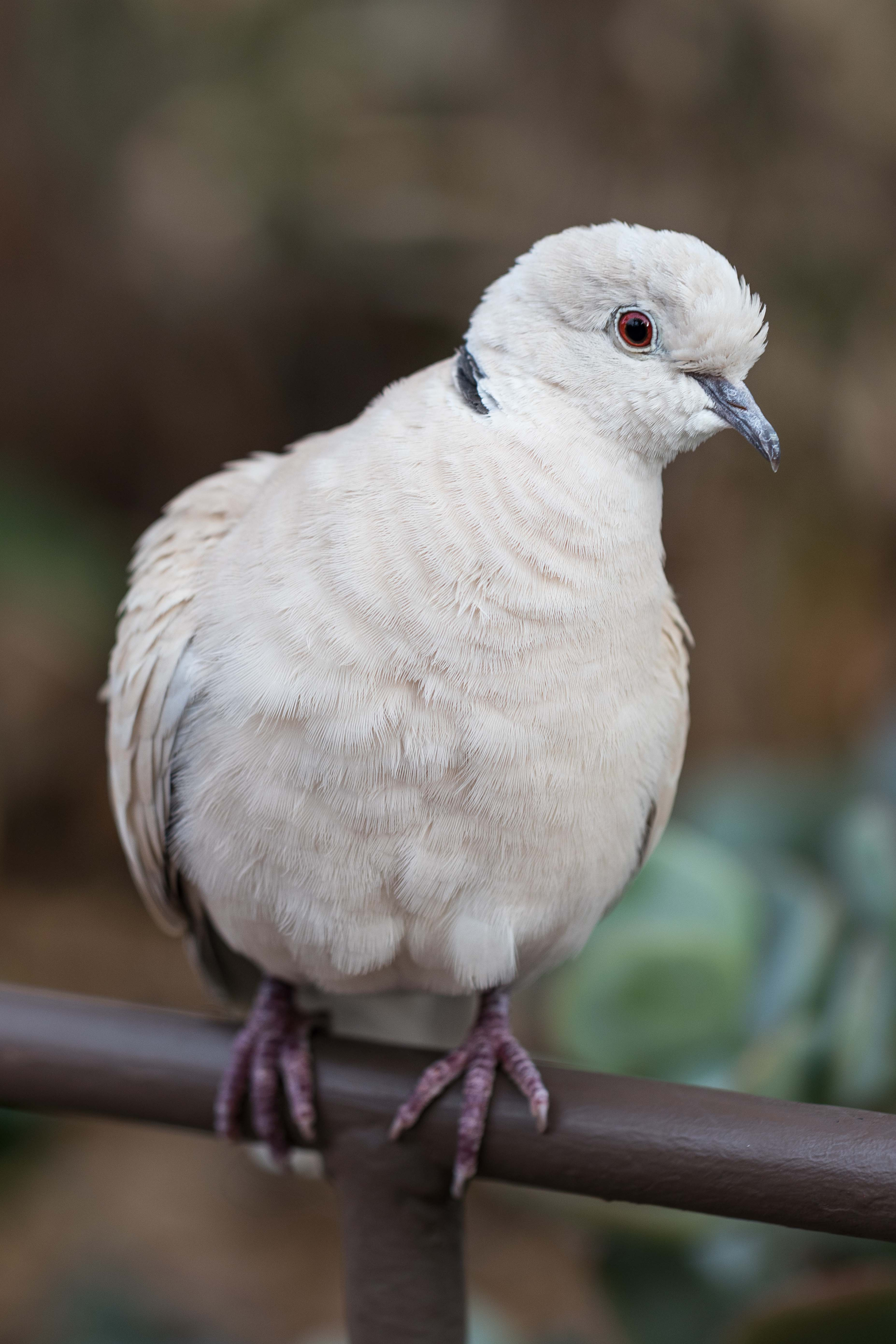 Doves at the Domes | https://www.roseclearfield.com