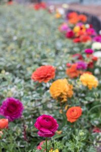 Shakespeare in Love Spring Floral Show at the Mitchell Park Domes   https://www.roseclearfield.com