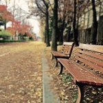 20 Creative Fall Photography Ideas - Brown Wooden Bench with Brown Dried Leaves by Zino Bang via Pexels | https://www.roseclearfield.com