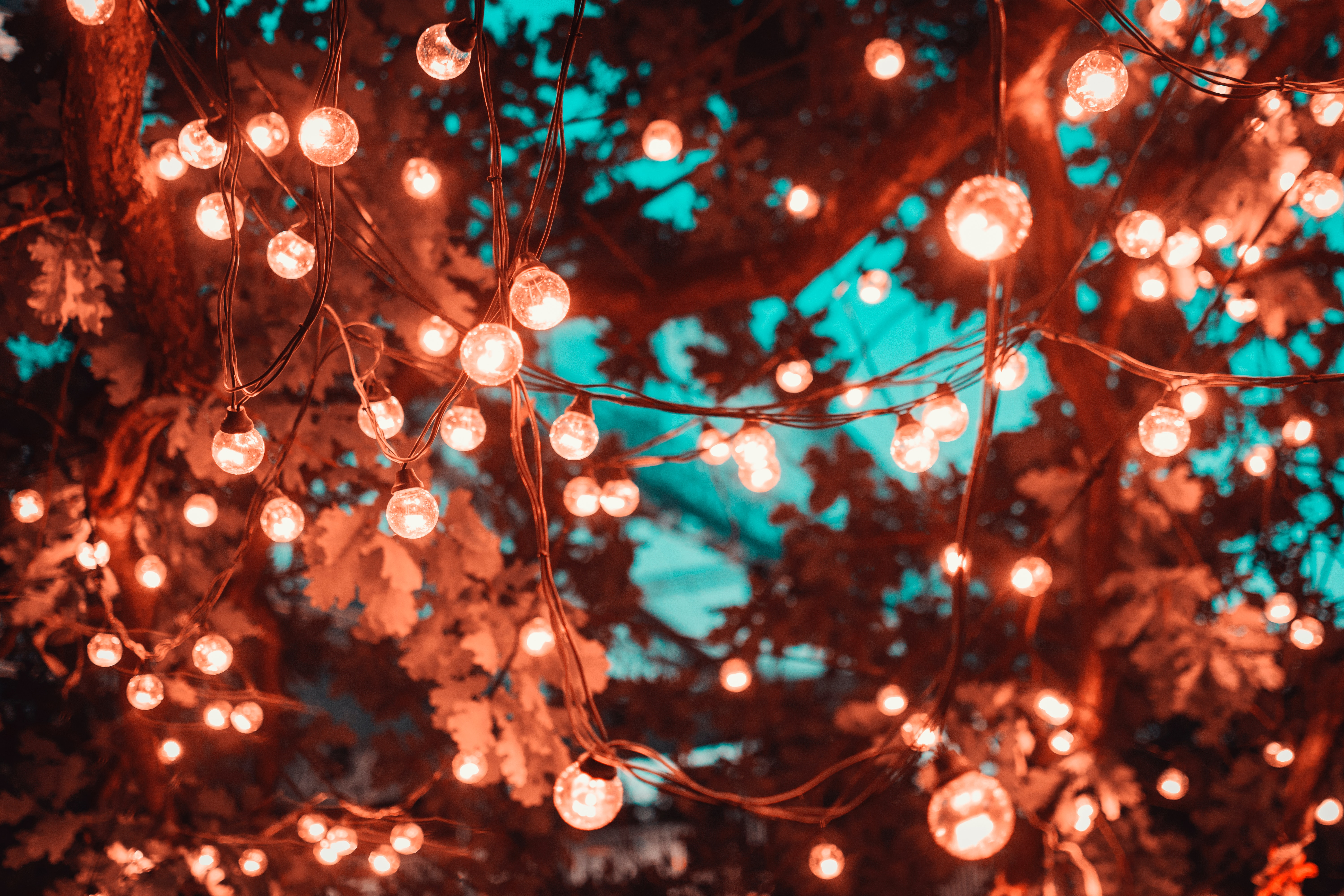 20 Creative Fall Photography Ideas - Brown String Lights in Tree by Artem Saranin via Pexels | https://www.roseclearfield.com