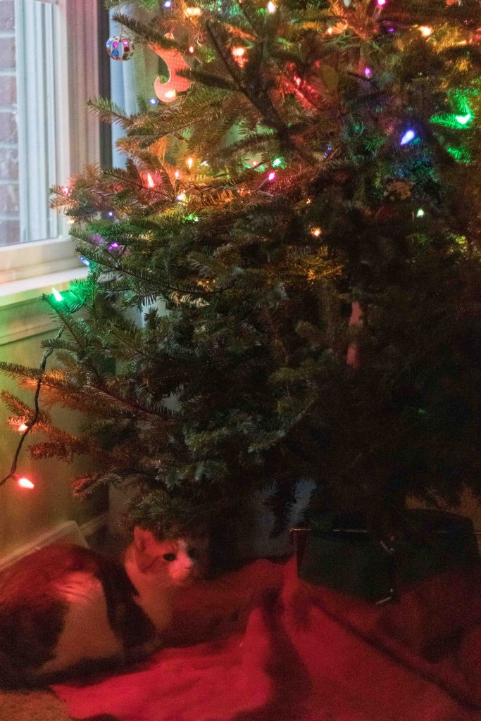 Hobbes Under the Christmas Tree 2018 | https://www.roseclearfield.com