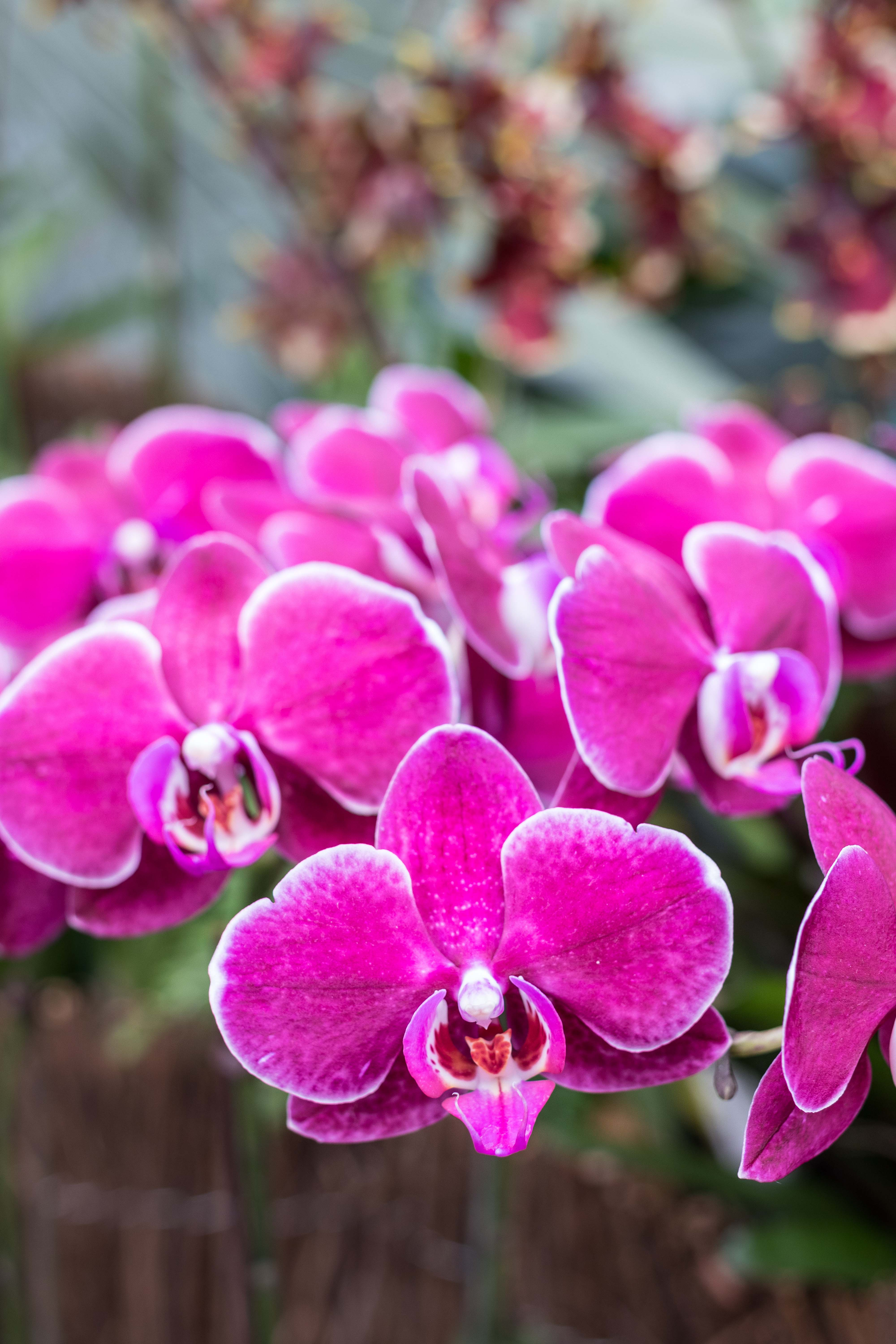 In the Tropics: The Orchid Show at the Chicago Botanic Garden | https://www.roseclearfield.com