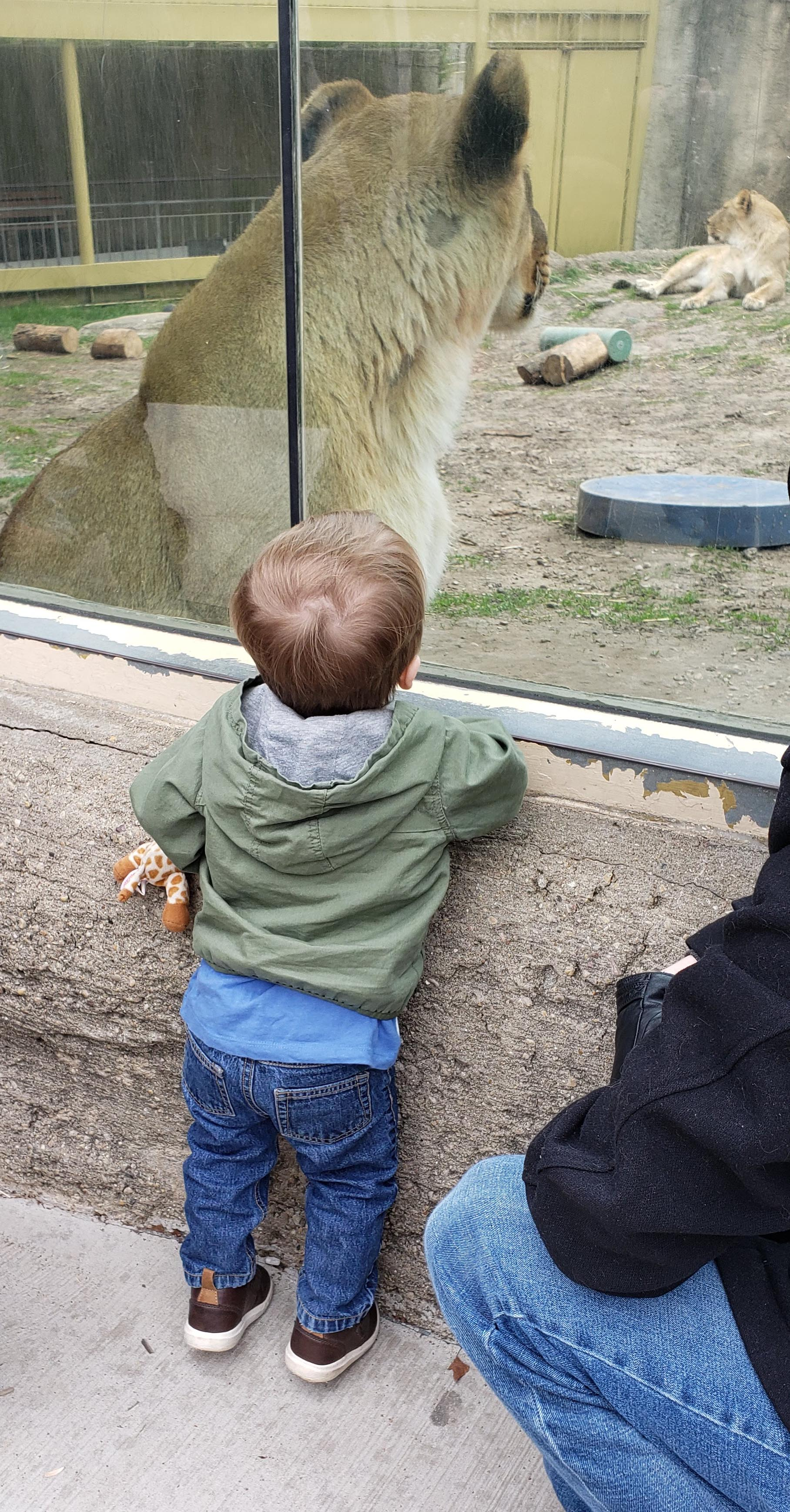 Tommy at the Zoo April 2019 | https://www.roseclearfield.com
