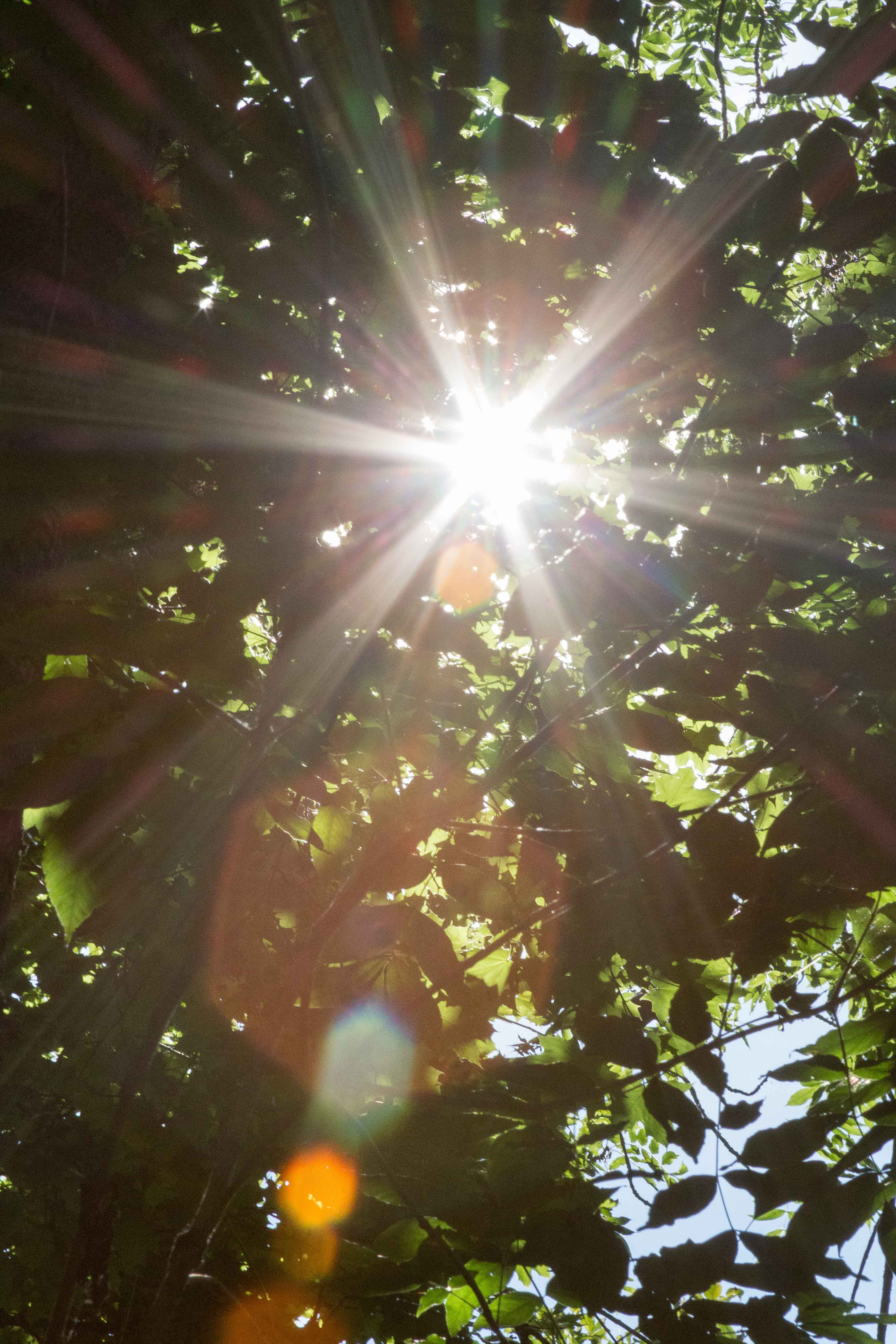 Sunflare #sunflare #creative #summer   https://www.roseclearfield.com
