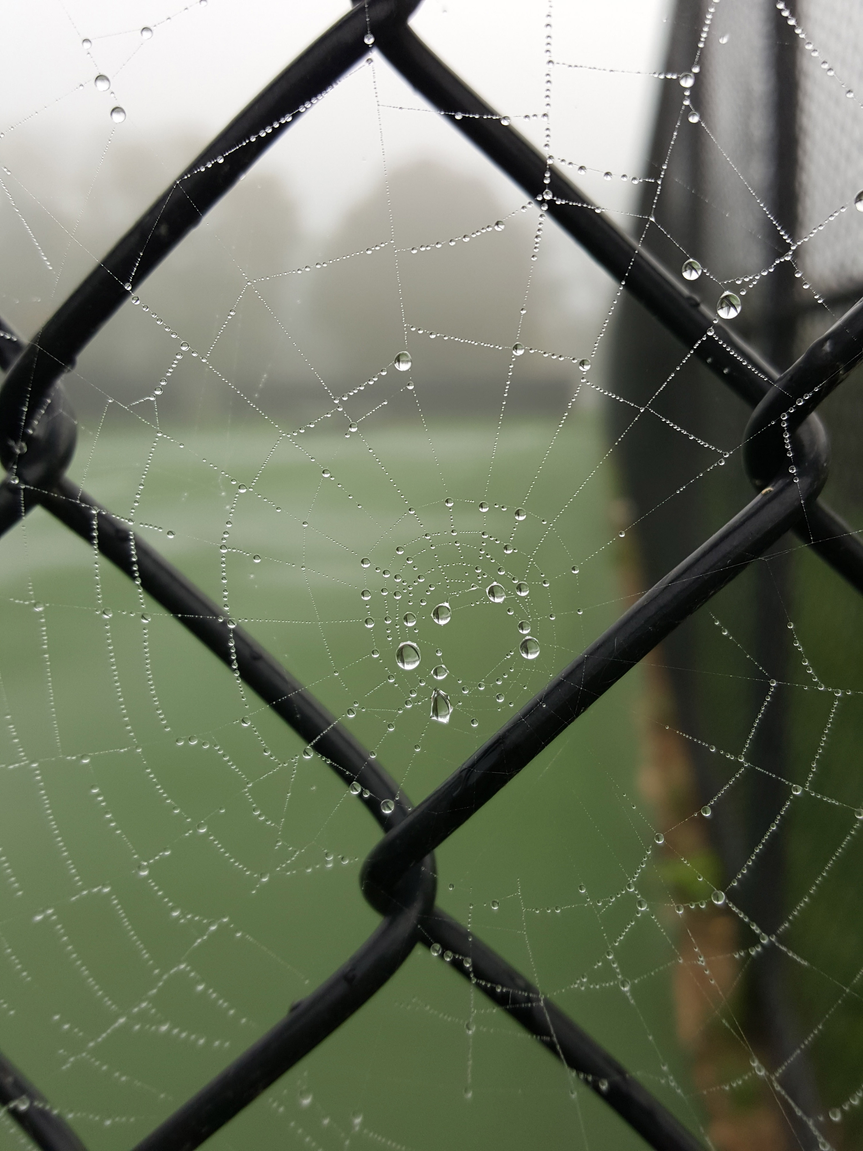 Rain-filled spiderweb in the fog. #spiderweb #raindrops #fog | https://www.roseclearfield.com