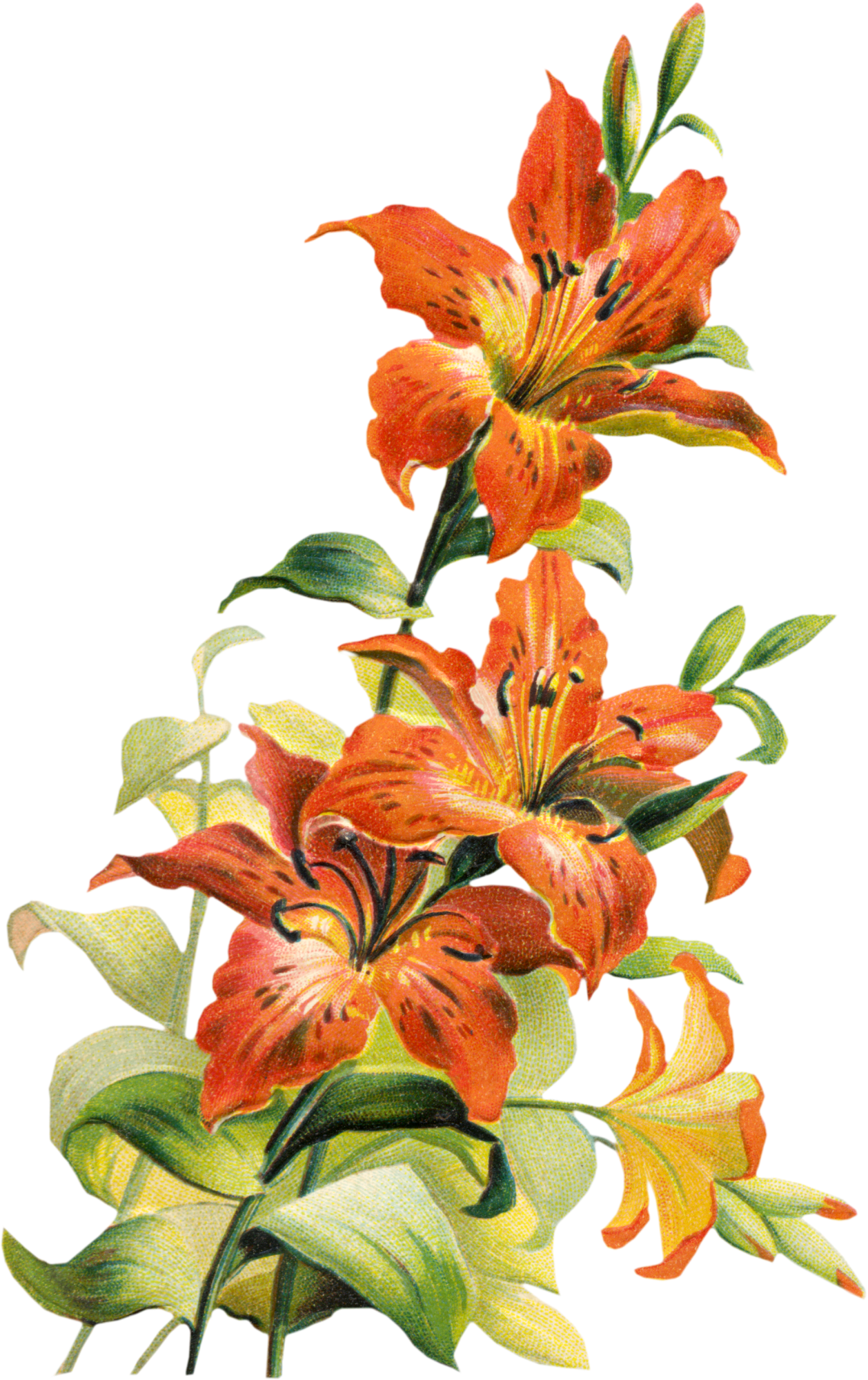 Botanical flower PNG | https://www.roseclearfield.com