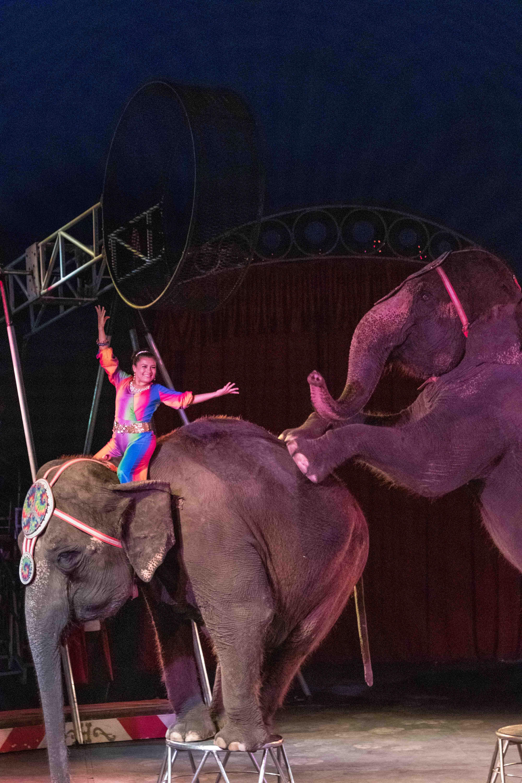 Circus World elephants