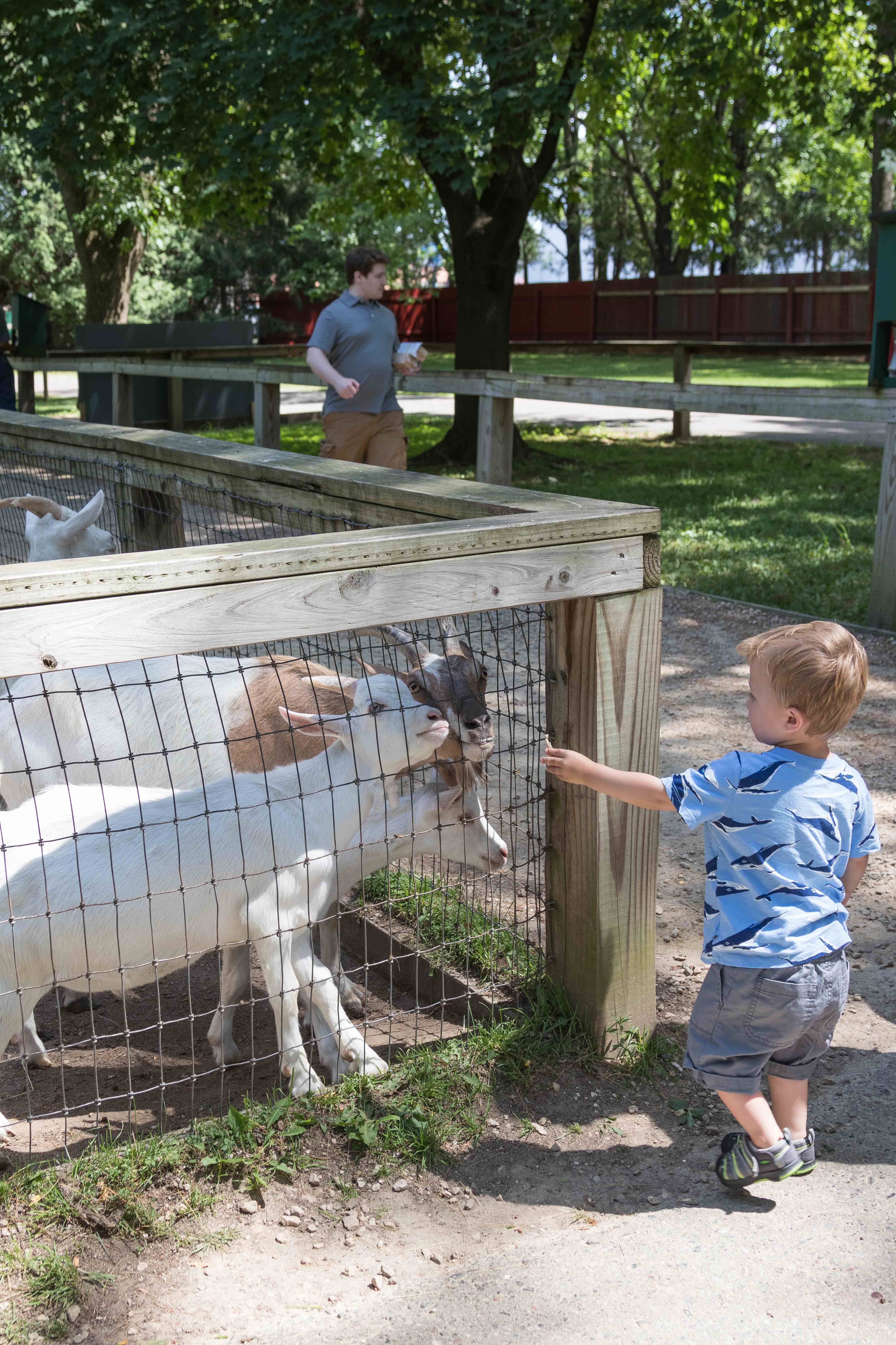 Feeding the goats at the Wisconsin Deer Park