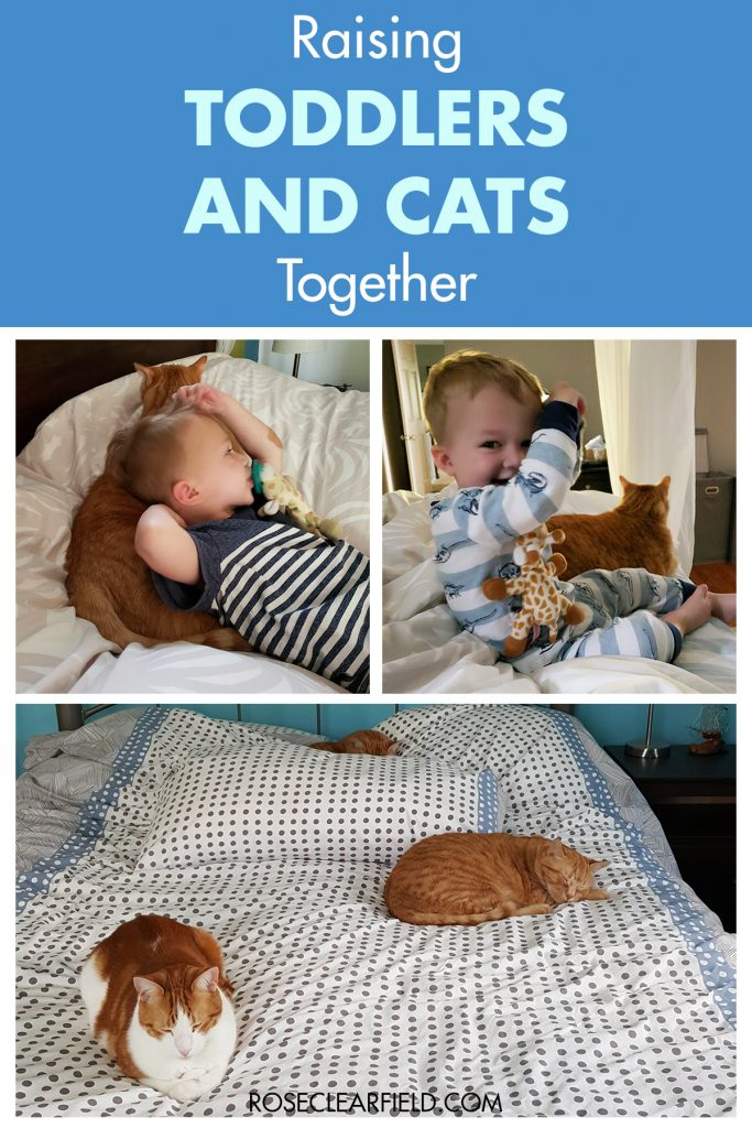 Raising Toddlers and Cats Together