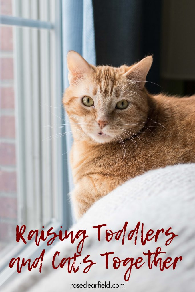 Raising toddlers and cats together. I share my best tips for keeping everyone safe and happy and teaching toddlers how to treat and care for their pets. #toddlers #toddlerlife #raisingtoddlers #toddlersandpets | https://www.roseclearfield.com