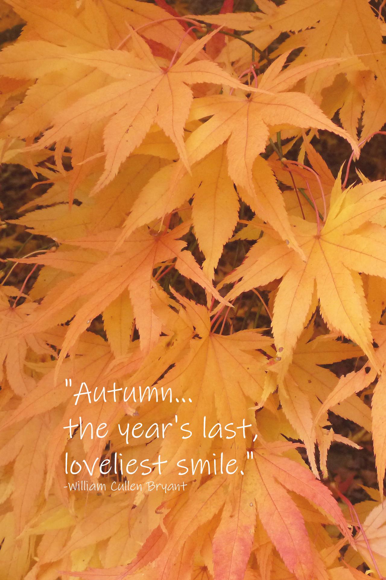 Autumn Loveliest Smile William Cullen Bryant Quote