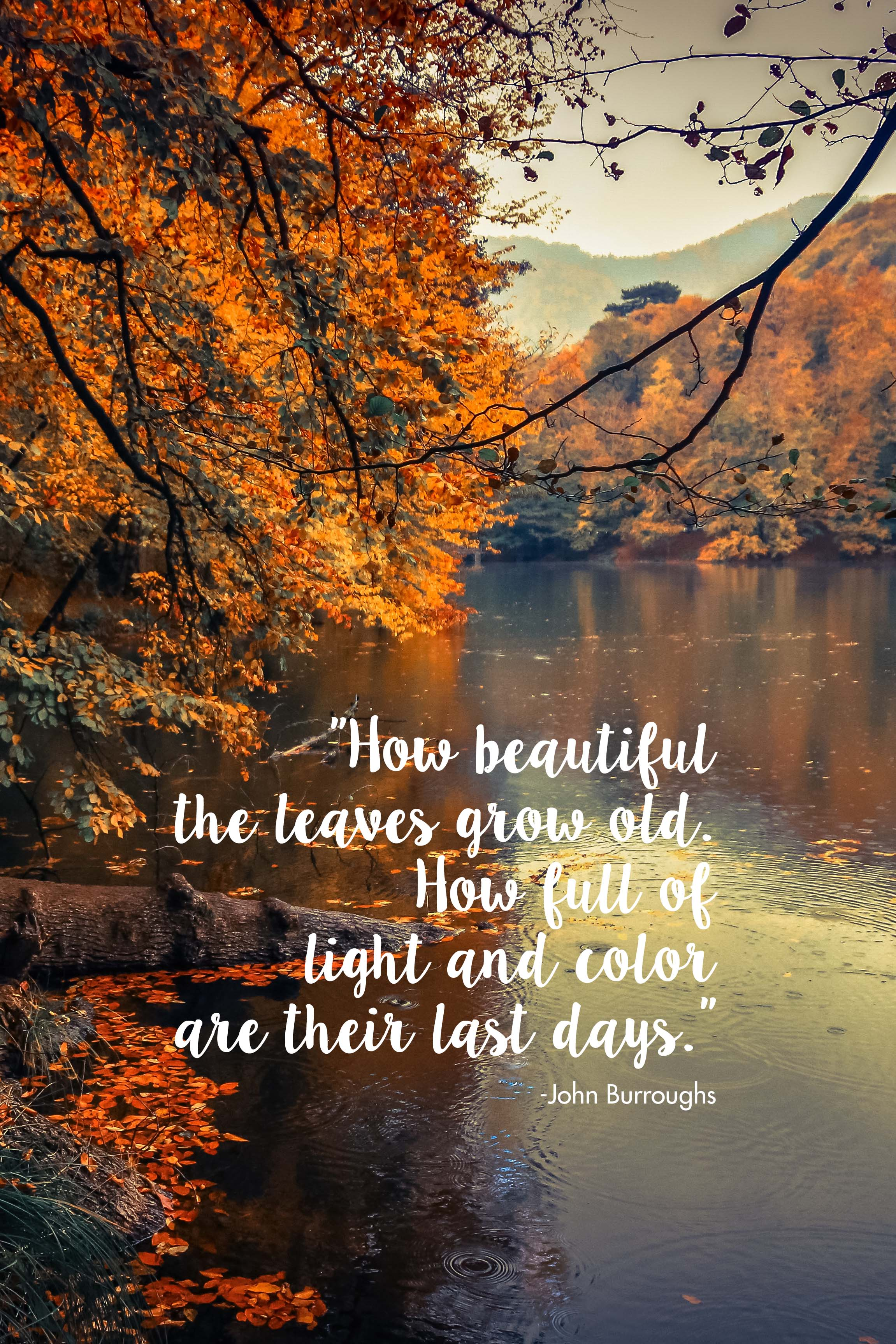How Beautiful the Leaves Grow Old John Burroughs Quote