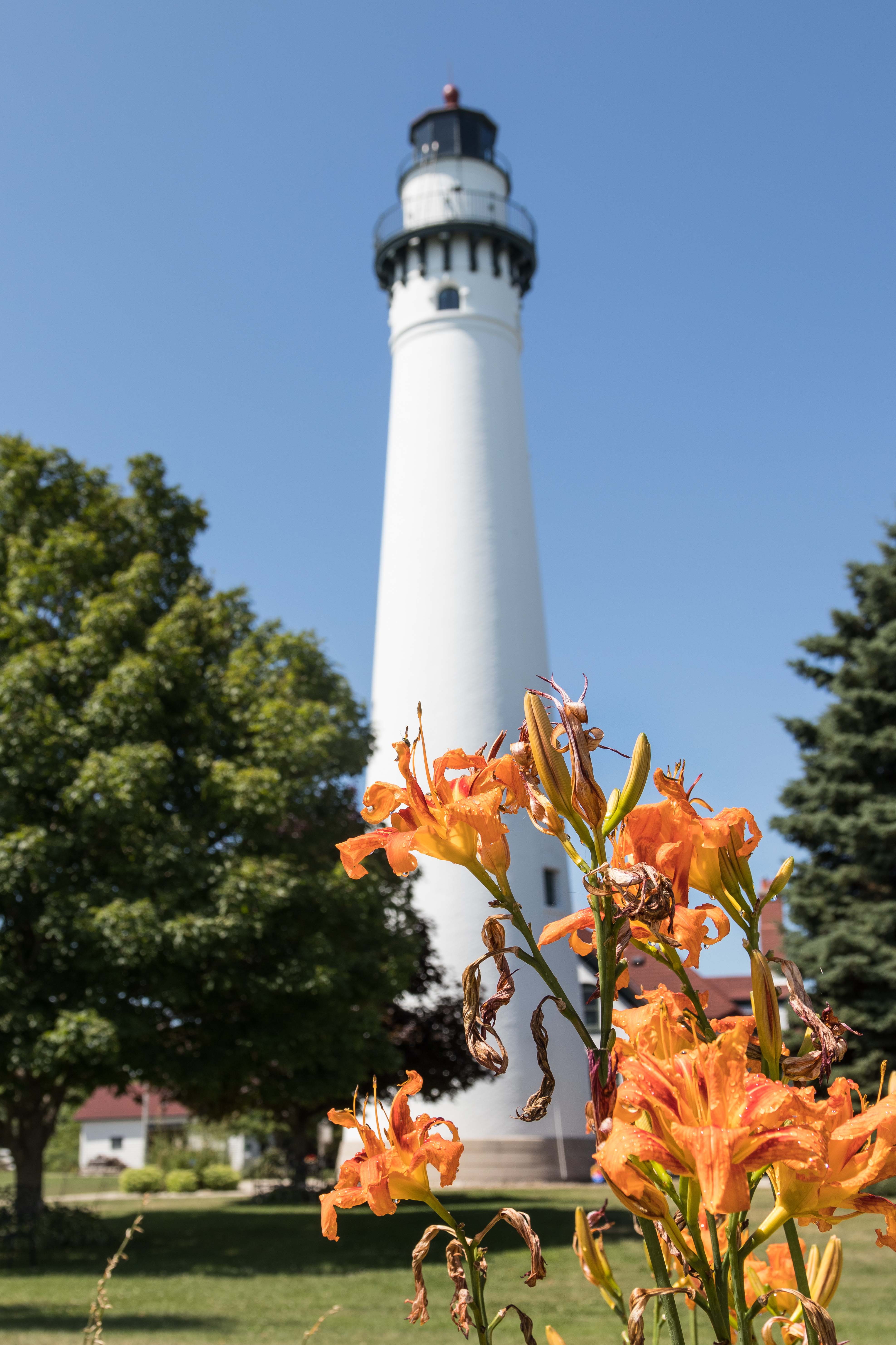 Wind Point Lighthouse with Lilies in August