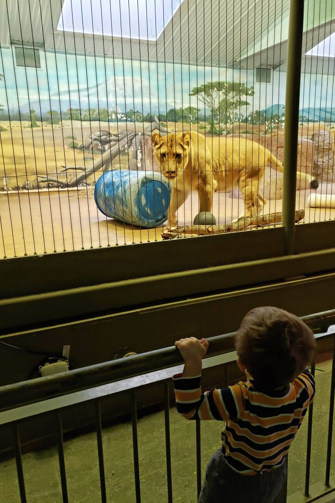 Tommy at the Zoo