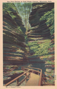 Vintage Postcard Wisconsin Dells The Fern Garden in Cold Water Canyon