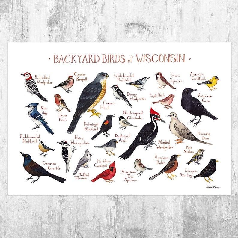 Wisconsin Backyard Birds Field Guide Wall Art Print KateDolamore on Etsy