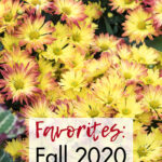 Favorites Fall 2020
