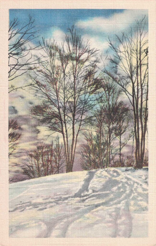 Vintage Postcard Winter Woods Scene 2