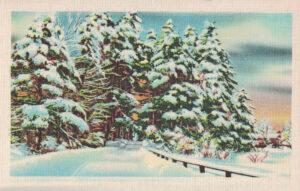 Vintage Postcard Winter Woods Scene