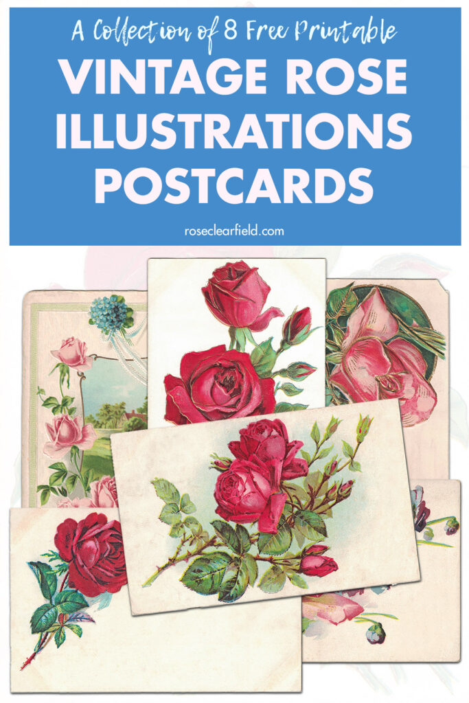A Collection of 8 Free Printable Vintage Rose Illustrations Postcards
