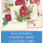 Free Printable Vintage Rose Illustrations Postcards