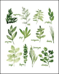 Watercolor Herbs Collage With Names