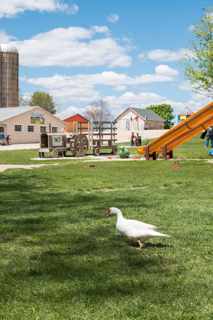 Green Meadows Petting Farm, East Troy, Wisconsin